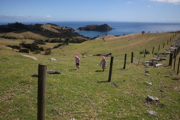 NZ1_3489 (1024x683)