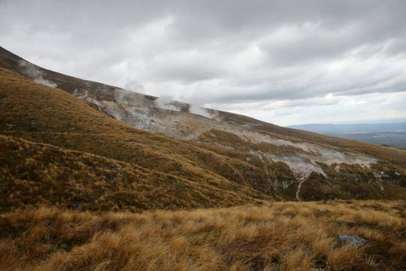 NZ1_4085 (1024x683)