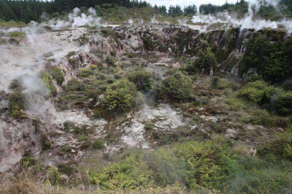 NZ1_4182 (1024x683)