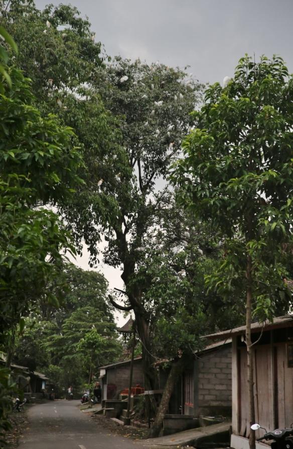 INDO0959 (668x1024)